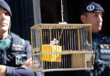 Recreació d'una urna dins una gàbia davant la guàrdia civil al Departament de Governació / Pere Francesch